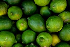 Close view of several green lemons. Of vibrant green and yellow colors stock photo