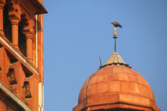 Close view of a small dome with hawk sitting on top, Safdarjung Royalty Free Stock Photography