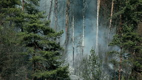 Close view of smoke, natural catastrophe in forest