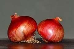 Close view of Two onions, Pune. Close view of Two onions at Pune Royalty Free Stock Photos