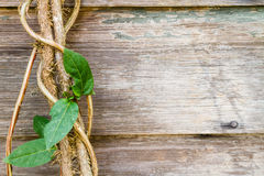 Close view of a vine against rustic wood boards. Stock Photo