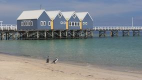 Busselton jetty and cormorants close up. Close view of western australia`s busselton jetty, the longest jetty in the southern hemisphere, and two cormorants on stock footage