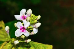 White flowers, Pune. Close view of White flowers at Pune Royalty Free Stock Photos