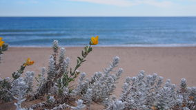 Close view of white and yellow flowers at Mediterranean beach. Spain Stock Photo
