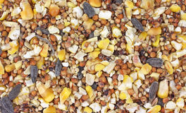 Close view of wild bird food Stock Photos