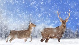 Close young deer in nature. Winter time royalty free stock photography