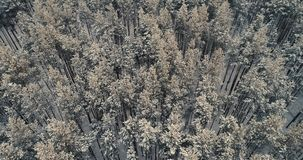 A close and zooming out view on tops of forest trees covered in snow. 4K. A close and zooming out view on tops of forest trees covered in snow stock footage