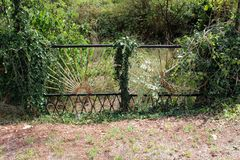 Closed backyard metal doors with cracked rusted paint completely overgrown with dense crawler plants surrounded with dried grass stock image
