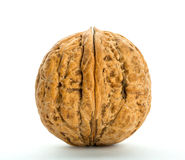 Closed big walnut Royalty Free Stock Photography