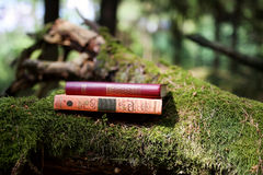 Closed books outdoor. Knowledge is power. Book in a forest. Book on a stump Royalty Free Stock Image
