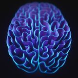 Closed Brain Maze Royalty Free Stock Image