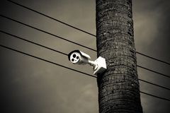 Closed circuit camera. On the tree royalty free stock photography