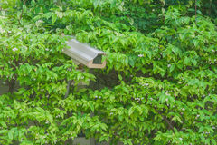 Closed circuit camera. Closed circuit camera in green bush royalty free stock photography