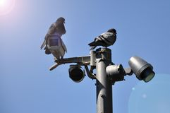 Closed circuit camera Multi-angle CCTV system against the blue sky. Installed on a city street stock photo