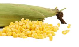 Closed corncob and corn kernels Royalty Free Stock Images