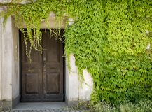 Closed door and green vines Stock Photos