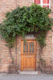 Closed door with vines on the street Royalty Free Stock Images