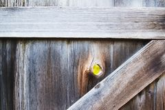Closed gate with hole in knot of wood with grass visible on other side. Textured wooden gate with peephole and greener on the other side stock photo