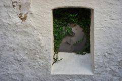 Closed metal plate window, overgrown with ivy, on a white wall Royalty Free Stock Photography