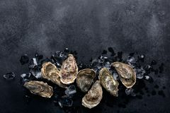 Closed oysters on black chalkboard background. Healthy sea food. Oysters and ice on on black chalkboard. Shellfish contains a mass of beneficial micronutrients stock image