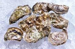 Closed oysters Royalty Free Stock Image