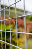 Closed Padlock Locked onto a Square Metal Fence - vertical Royalty Free Stock Images