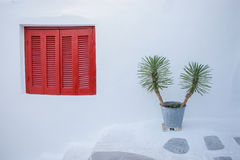 Closed red window cover and a plant in front of a white wall Stock Images