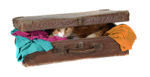 Closed suitcase with clothes and cute tomcat Stock Photos