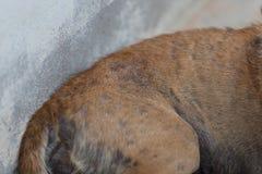 Bad skin of dog. Closed up bad skin of dog stock image