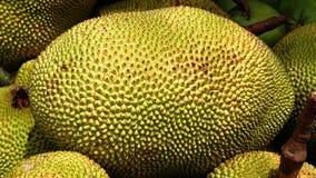 Closed-up of a big jackfruit Stock Photography