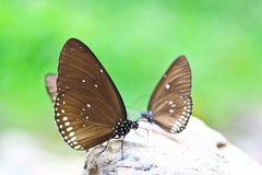 Closed up of butterfly Royalty Free Stock Photos