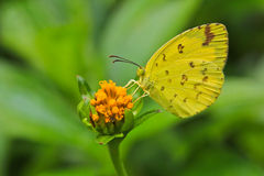 Closed up of butterfly Royalty Free Stock Images