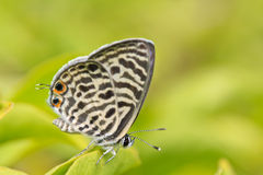 Closed up of butterfly Royalty Free Stock Photo