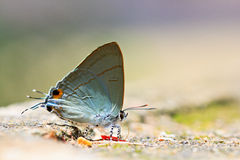 Closed up of butterfly Stock Photography