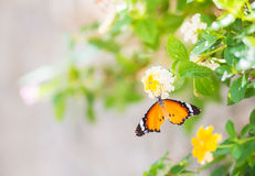 Closed up Butterfly on flower Stock Image