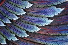 Closed-up of colorful feather concrete stucco design