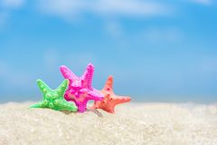 Closed up on colorful starfish,beautiful sea shells on the seash stock images