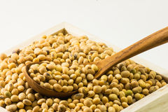 Closed up dried soybean Stock Images
