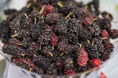Closed up of fresh organic ripe mulberry Royalty Free Stock Photo