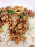 Closed up the fried basil leave with pork on rice Royalty Free Stock Photo