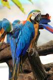 Closed Up Macaw Stock Photography