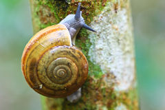 Free Closed Up Of Snail Stock Images - 41976324