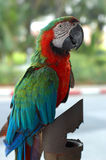 Closed up parrot. On the park Stock Photography