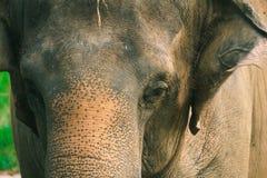Closed up potrait of elephant. stock photography