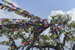 Closed up prayer flag in Nepal Royalty Free Stock Photos