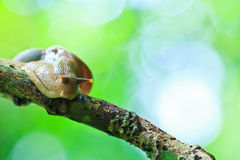Closed up of snail Royalty Free Stock Images