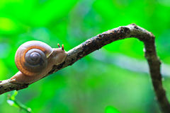 Closed up of snail Stock Photos