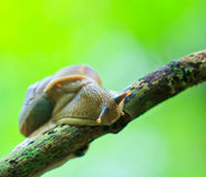 Closed up of snail Stock Images