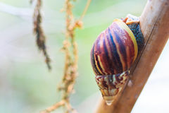 Closed up of snail Stock Photography