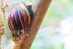 Closed up of snail Stock Photo